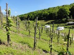0104 Weingut von Nell 00-03