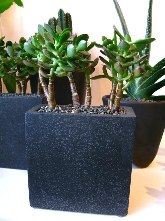 plantings 007