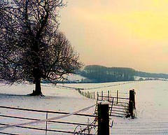 Winter in Herefordshire UK #dailyshoot #365