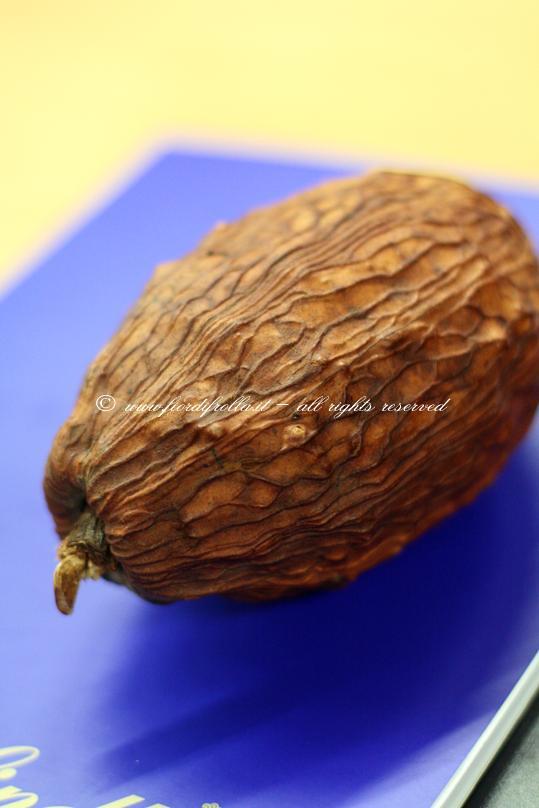 Frutto della pianta di cacao