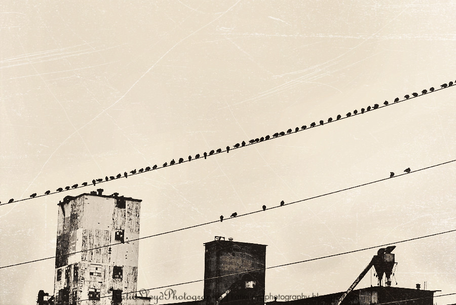 Brids-on-Wire-Vintage