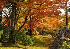 秋の宝厳院庭園 (nobuflickr) Tags: autumn nature japan garden kyoto autumncolors 京都 庭園 citrit hougonintemple 宝嚴院