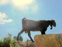 guide (Mme Shino) Tags: goat jordan 短歌
