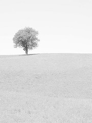 nights in white satin (mags_Tag) Tags: white black tree landscape austria illusion landschaft weiss baum schwarz oesterreich