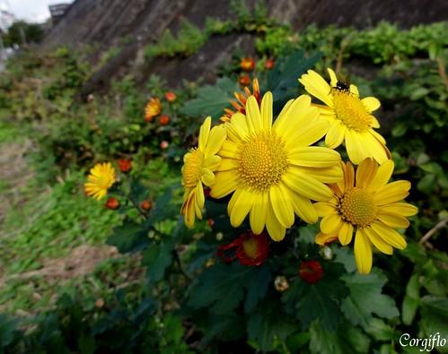 BlogJardin-101204-automne-07