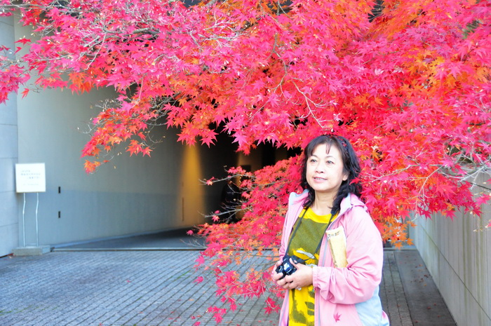 MIHO美術館楓葉情12