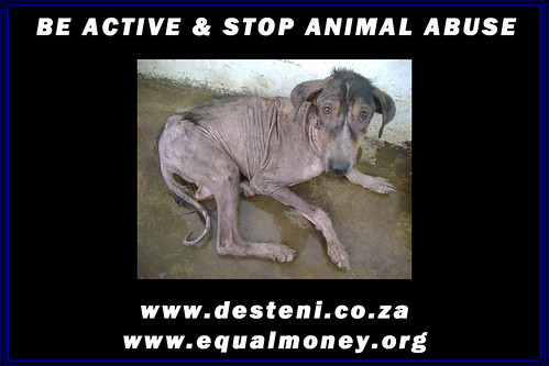 Stop Animal Abuse Pictures. STOP animal abuse with DESTENI
