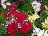 100_5356 (stahrman) Tags: county our roses saint st lady catholic roman mary indiana jackson seymour guadalupe ambrose stahrman bstahr