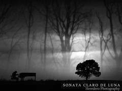 Sonata Claro De Luna (Moonlight Sonata) (#123 Project Music Vs. Photo) (Heredero 3.0) Tags: show park christmas street new old trip travel parque autumn trees light sea vacation portrait people urban espaa music white mountain black flower color colour macro tree art nature water rock night river landscape geotagged photography photo spain friend europe raw photos live natura beethoven otoo fujifilm jpeg s700 sonata s5700 yellowpiano
