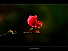 colorful (e.nhan) Tags: pink flowers red white black flower nature yellow closeup landscape colorful colours shadows dof bokeh enhan specanimal mywinners colorphotoaward