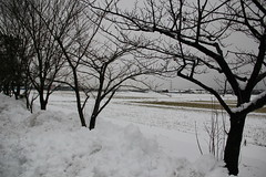 Snow, Keiwa College