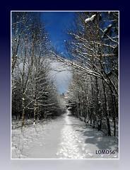 Winter-Impressionen 2010 (LOMO56) Tags: eifel bitburg winterimpressionen winterlandschaften winter2010 schneelandschaften knigswldchen