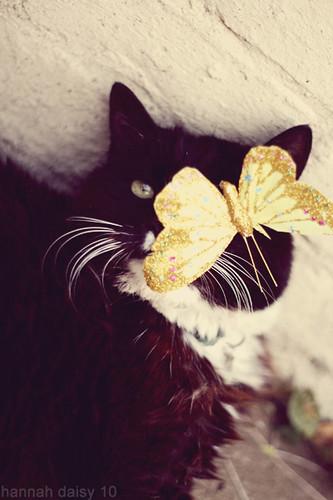 glam-o-kitty