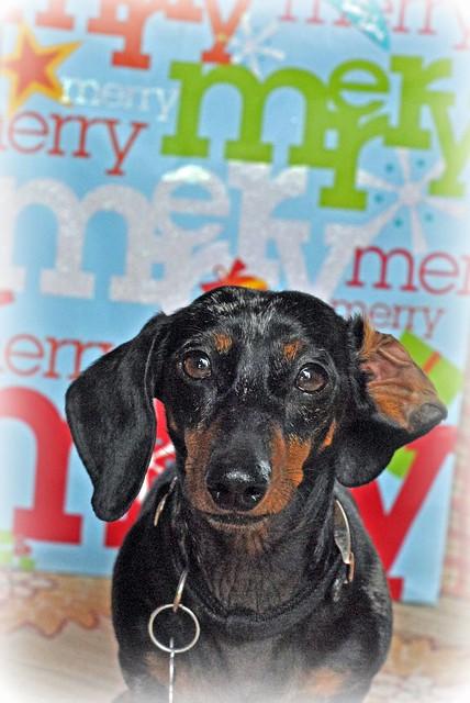 Merry Roxy Doxy