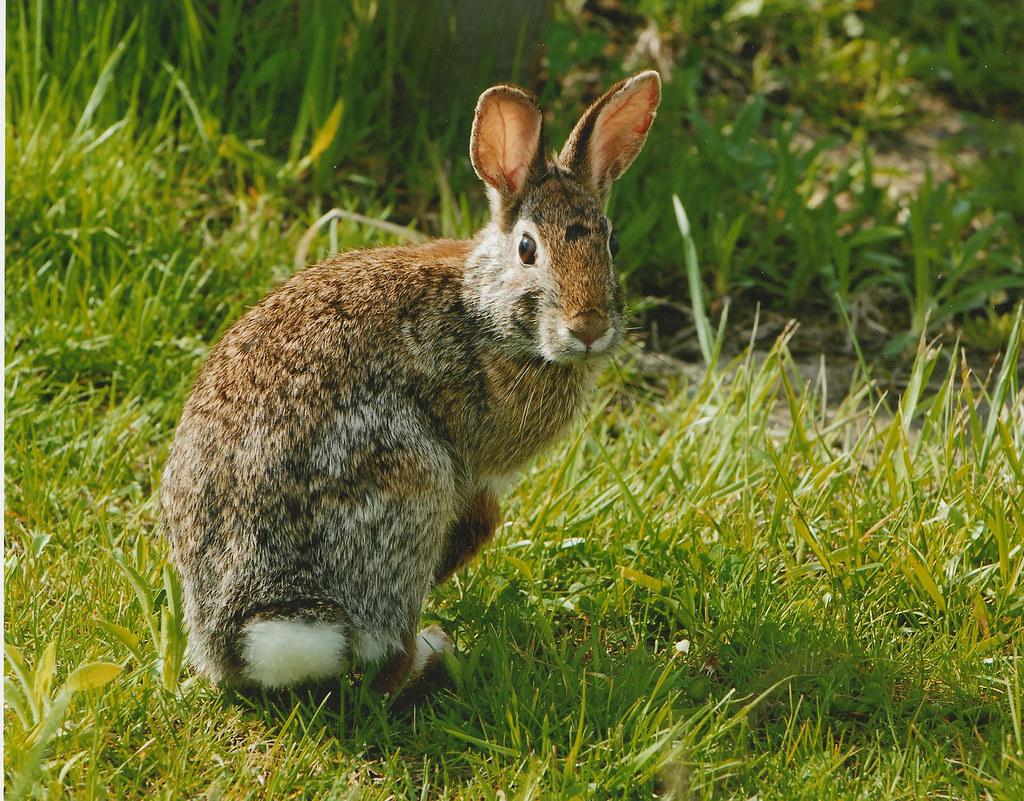 ウサギの画像 p1_31