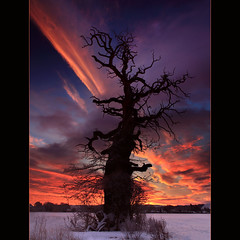 The Cromwell Tree @ Dawn (angus clyne) Tags: life road wood old uk bridge winter red sea portrait orange cloud sun snow storm cold tree ice field night digital forest sunrise river lens landscape dead rising dawn one coast scotland living big high ancient europe frost day branch purple angle sweet angus path farm north wide perthshire dream fork east explore filter christmass bark lee nd twig lone chestnut tall split grad dri cracked firth blending clyne earn sweetchestnut newvision strathearn thesecretlifeoftrees canon5dmarkii