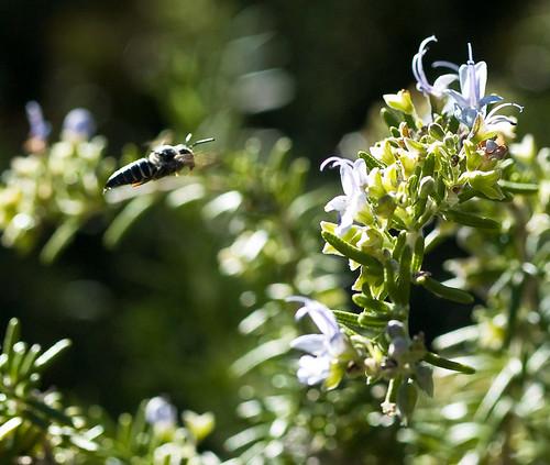 bee & rosemary