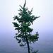 treebend