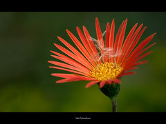 Flower Crib.. (Vijay..) Tags: red green nature canon flora bokeh 224 explored vijayphulwadhawa flowercrib