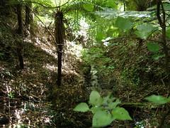 Otari Nature Walk (teddypopit) Tags: newzealand forest nz wellington naturewalk otarinaturewalk