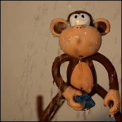 Warm shower (Rigib) Tags: macro water canon square shower monkey mono explore macaco 60mm abe affe  mapa  lens00025 bobbyjack explore85   ourdailychallenge