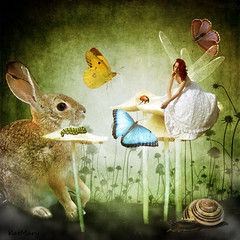 my sweet friends (katmary) Tags: rabbit bunny fairytale butterfly mushrooms wings magic snail caterpillar fairy fantasy ladybug imagination enchantment faerie toadstools sunrunner brendastarr obsidiandawn yndra joessistah howcheng groupka