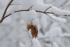 DSC_3465 (breandan.dezendorf) Tags: winter snow potd snowpocalypse winter2010 snowmageddon potdfinal