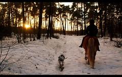 Sun Down (Barbara K*) Tags: winter horse dog girl mare afternoon sundown spot tessa sacha emsland haflinger 2011 stute ausreiten bramsche bej abigfave anawesomeshot anawsomeshot ridingout httpwwwflickrcomgroupsgoldstaraward dalmatinerlabrador