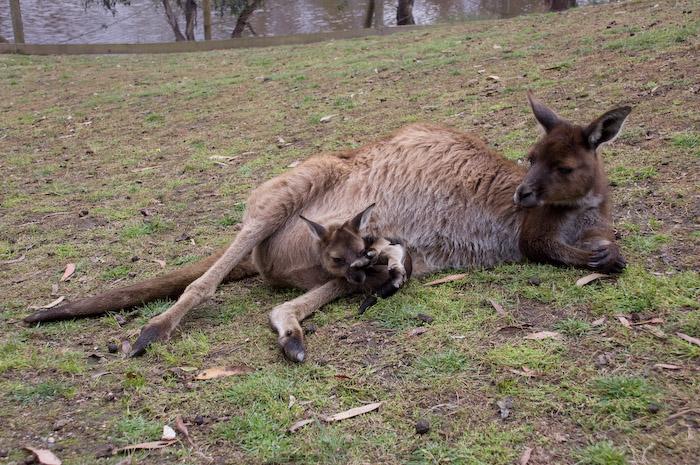 Australia (143 of 332)