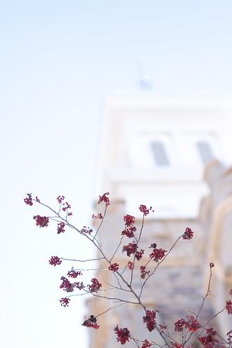 Court wedding-4