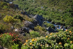 River in Mountain (.donelle) Tags: plants mountain southafrica naturereserve kleinmond inthemountain kogelbergbiosphere