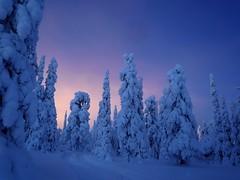 Ruka (timo_w2s) Tags: trees winter snow night forest finland snowy lapland kuusamo lightpollution ruka