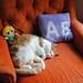 5/365 - Rainy Day Cat Nap