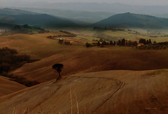 Into the distance (Robyn Hooz) Tags: houses italy panorama canon landscape italia view horizon case tuscany vista albero 550 orizzonte efs55250is