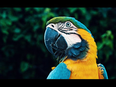 Parrot. I want one. (KeizGoesBoom) Tags: blue holiday cute bird portugal animal closeup female pretty parrot domestic tropical algarve macaw lora hotelcasino sonya100