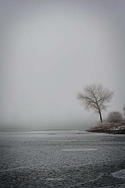 Greyhound Cold Lake