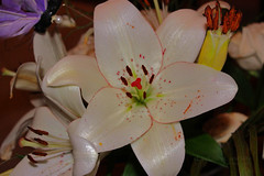 Where Flowers Bloom So Does Hope ♥ (eL reEem eL sro0o7e ♥) Tags: sun flower color love nature beauty clouds peace simplicity