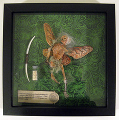 specimen display (Marc Palm AKA Swellzombie) Tags: green insect skeleton fairy bow mysterious bone scroll artifacts specimen rhiashall