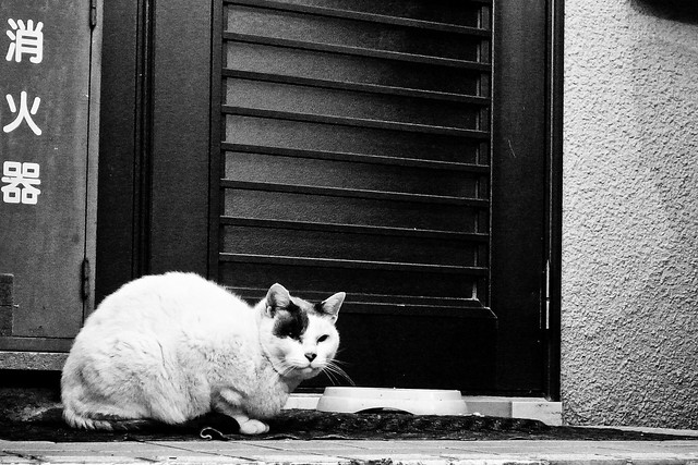 Today's Cat@2011-01-20