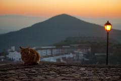 Quiero dormir (Fernando Navarrete) Tags: atardecer pueblo sierra gato jaen naranja suelo vilches
