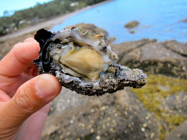 Free Oysters On The Beach (Up To 50 Per Person Daily)