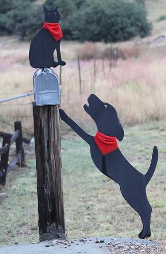 Dog & Cat Mailbox