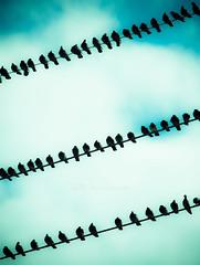 (HisPhotographs.com) Tags: park blue sky bird birds ga georgia wire pigeons air wires savannah birdonawire birdsonawire birdsonwires lakemayer