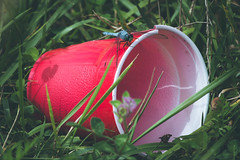 arrowhead lake. 2016 (timp37) Tags: july red cup plastic garbage insect dragonfly illinois 2016 summer arrowhead lake