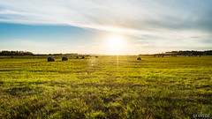 Bales (Grempz) Tags: grass albertatourism nikon haying hay redwater rual white thorhildcounty landscape harvest haze dust opal country tourism 20mm18 farmers green alberta fields bales canada blue sunclouds farm d610