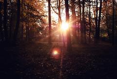 lazer beams (ewitsoe) Tags: poznan poalnd parksolacki sunrise sun trees forest forests woods ewitsoe nikond80 35mm street landscape brightlight rise autumn fall