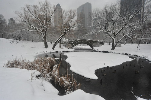 WINTER STORM in CENTRAL PARK 2011   -  Manhatt...