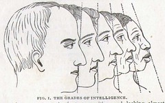1886 Two Paths What Will The Boy Become? Victorian Phrenology Chart Medical Quackery (detail) (SurrendrDorothy) Tags: old boy chart man male art face illustration drunk vintage print weird sketch drawing antique character victorian science creepy wrong medical human lazy diagram article stupid etsy decor homedecor intelligent misinformation quackery artfire homegoods surrenderdorothy zibbet