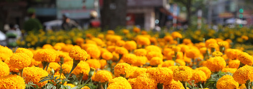 More Marigolds
