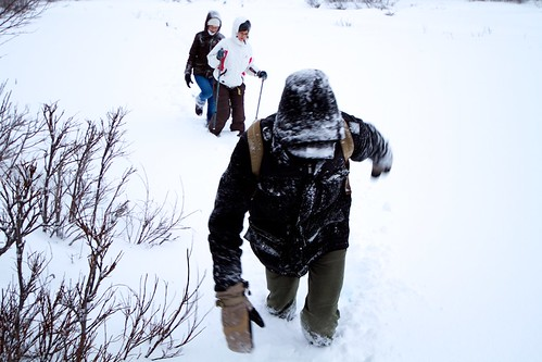 Snow in Abisko National Park